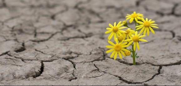 images-hopeflowerindrylakebed.jpeg